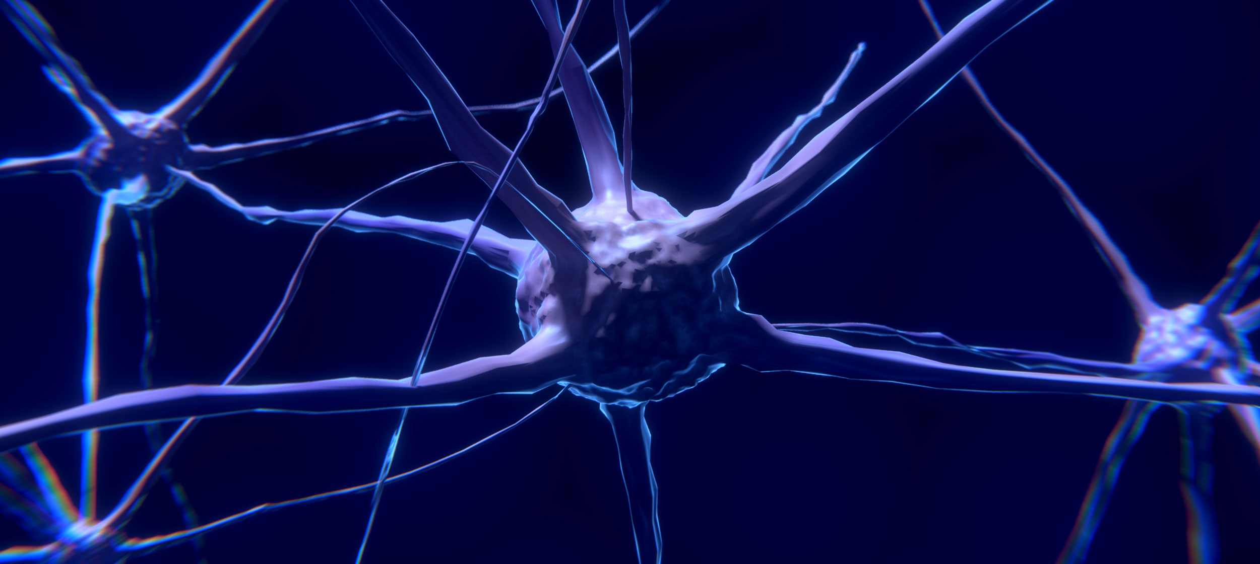 Neuron / Nerve
